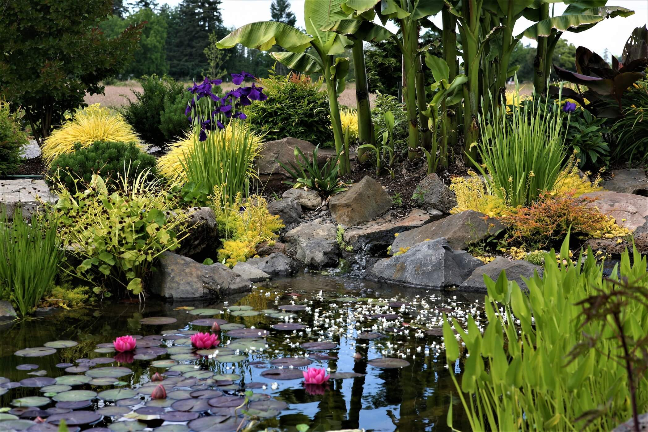 tropical water feature
